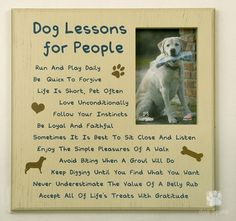 things we can learn from our dogs