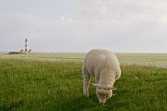 Sheep by Lutz Fischer on 500px