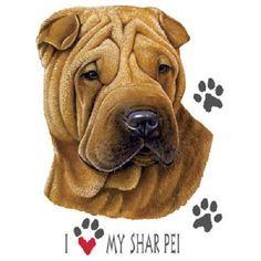 Shar Pei Dog HEAT PRESS TRANSFER for T Shirt Tote Sweatshirt Quilt Fabric #907a #AB