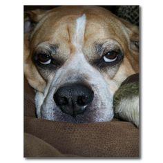 Patton Pending - Bored Dog