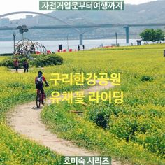 구리 유채꽃축제 자전거 여행