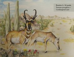 Art Contest grade winner and contest runner up, Grades 6-8: Sonoran pronghorn and endangered cacti, Brandon Li, Age 12, Montgomery Upper Middle School