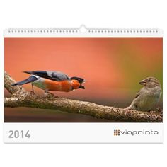 Lutz Klapp - Vögel in unseren Gärten | https://www.viaprinto.de/motivkalender#/voegel_in_unseren_gaerten Kalender 2014, Werbekalender, Online drucken, Fotokalender