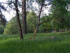 0 Mosquito Rd, Placerville, CA 95667 — 40 Acres. Minutes to Placerville. An exceptional find, close in, great views of the American River Canyon. Property borders 80 acres BLM. Build your dream home, private, views, room for orchards, horses, cattle, etc.