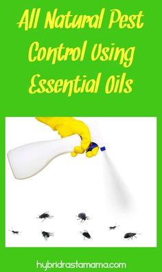 Learn more about all natural pest control using various essential oils. Find out which oil works best for 20 insects. In addition grab a great all-natural bug off spray and a fire ant revenge potion from HybridRastaMama.com. #pestcontrol #greenliving #bugspray #essentialoils  via @hybridrastamama