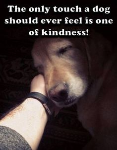 a dog - all living beings - should only be touched with kindness