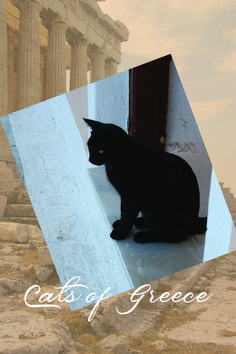 I came across these Grecian cats on a trip some years ago. Journeying to foreign lands has almost always been spurred by my desire to explore a fresh landscape for one of my books. This was no exception. Book Lovers, Cat Lovers, Life Partners, Almost Always, My Books, Greece, Creatures, Romance, Author