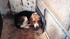 "Petition Update · Massive thanks to all who attended yesterday! ·""Rt Hon David Cameron MP: Reverse the government's decision to give the go ahead for a puppy farm in Hull...""  No more breeding beagles for testing!  Please keep sharing this petition. Change.org"