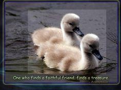 faithful = treasure