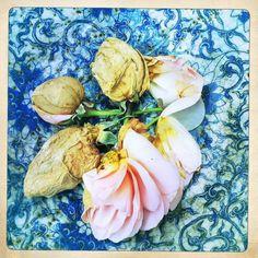 Bad Summer, Rotten Roses ©les broutilles 2012