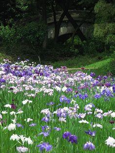 Koishikawa Korakuen Gardens - Tokyo, Japan