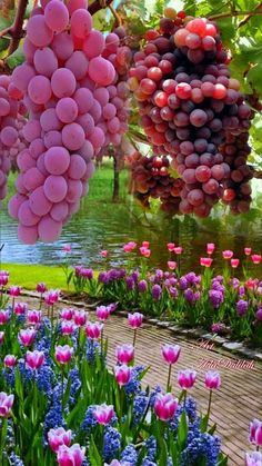 Beautiful Fruits, Most Beautiful Gardens, Beautiful Flowers, Floral Wallpaper Iphone, Nature Wallpaper, Beautiful Photos Of Nature, Amazing Nature, Fruit Plants, Fruit Trees