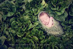 © wildflowers photography