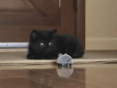 Big scary mouse - Meow Gifs