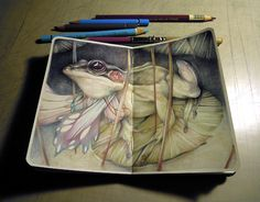 Marco Mazzoni frog #illustration