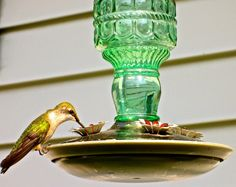 Female Ruby Throated Hummingbird at Green Bottle Feeder