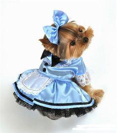 Fantasy Alice Dog Costume