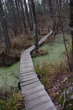 Swamp - an area of low spongy land too wet to farm but usually supporting an abundance of coarse grasses trees or other vegetation