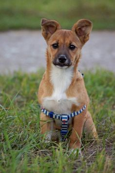 Девочка-щенок — Animalsburg.ru Анималсбург #собака #собакаищетпомощь #собакаищетдом #собакаищетхозяина