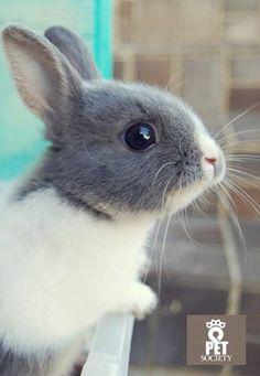 Pet Society Greece #pet #rabit #cute #bunny