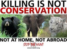 Speak out against trophy hunting here!        Whether it's targeting the bears of Florida, canned tiger hunts in Texas, or elephant trophy hunting in Africa, KILLING IS NEVER CONSERVATION! #betheirvoice