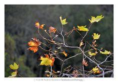 [2012 - Ribeiro Frio - Madeira - Portugal] #natureza #naturaleza #nature #fotografia #photography #foto #photo #europa #europe #paisagem #paisagens #paisaje #paisajes #landscape #landscapes @Visit Portugal @ePortugal