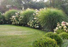 모닝라이트(참억새):그래스류 식물들은 다년생, 포기성장으로 생육조건 또한 까다롭지 않다