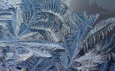 Frost patterns on the window - a magical pattern of ice crystals, which look like fern leaves.