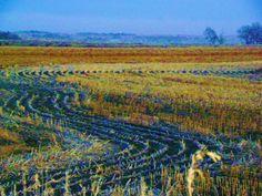 Iowa Harvest view