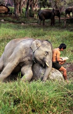 """""""Fusion: The Synergy of Images and Words, Part a collection of photos of people reading from all over the world (but mostly Asia and Italy), by photojournalist Steve McCurry (photographer of """"Afghan Girl""""). This photo was taken in Thailand. Steve Mccurry, Beautiful Creatures, Animals Beautiful, Cute Animals, Elephas Maximus, Images And Words, Elephant Love, Asian Elephant, Baby Elephants"""