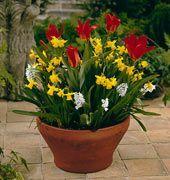 Γλάστρα ανθισμένη για τρεις μήνες την Άνοιξη Home And Garden, Flowers, Plants, Gardens, Decoration, House, Decor, Home, Outdoor Gardens