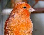 Pequeñas Aves - #Veterinario #Cornella #Exóticos www.veterinarioexoticos.com