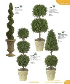 Statement boxwood topiary and evergreen