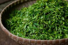 Tea is a work of art and needs a master hand to bring out its noblest qualities. by higher_tea Longjing Tea, Cuppa Tea, Green Tea Plant, Black Tea Leaves, Organic Green Tea, Toner For Face, Green Tea Extract, Small Farm, High Tea