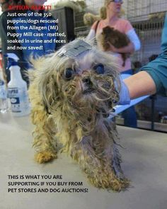Don't buy from pet stores or on line