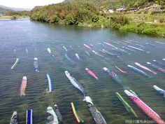 防府キタ!!5/5岩国だお(´∀`) @QNH2999 鯉のぼりの写真がけっこうアップされてますね。全国各地の鯉のぼりを見て楽しませてもらってます。 さて、ここで山口県防府市佐波川の鯉のぼりを見てみましょう。  す、水中こいのぼりとか... (´・ω・`) #大都会山口