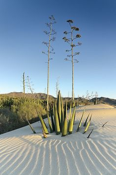 Almería, Andalucía,Spain. http://www.costatropicalevents.com/en/costa-tropical-events/andalusia.html