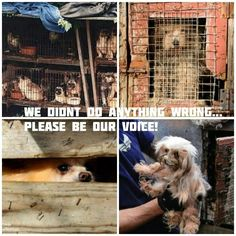 Help stop puppy mills - adopt, don't shop!