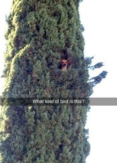 This new species. | 28 Snapchats That Will 100% Make You Smile
