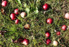 Alla kan plocka äpplen Red