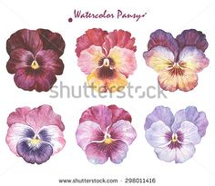 pansy illustration - Google Search