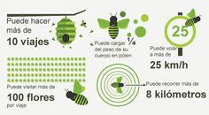 miel, honey, apicultura, bekeeping, colmena, hive, apicultor, beekeeper, propóleo, propolis, jalea real, royal jelly, polen, pollen.
