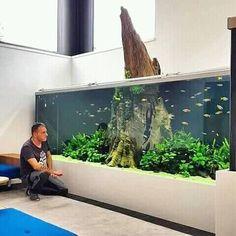 10 Tips on Designing a Freshwater Nature Aquarium Aquarium Design, Wall Aquarium, Aquarium Terrarium, Tropical Fish Aquarium, Aquarium Setup, Home Aquarium, Aquarium Fish Tank, Planted Aquarium, Tropical Fish Tanks