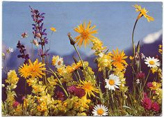'Field Flowers', printed in Switzerland  Mr Bingo collects