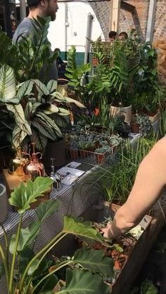 A little look at some of our previous plant markets Succulent Plants, Shade Plants, Planting Succulents, Indoor Garden, Indoor Plants, Green Rooms, Like Animals, Container Plants, Artificial Plants