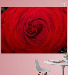 Macrofoto van een rode roos in bloei, schermvullend in beeld gebracht met alle details zichtbaar, optimaal belicht direct op het onderwerp. Close Up, Canvas, Wall, Prints, Tela, Canvases, Walls