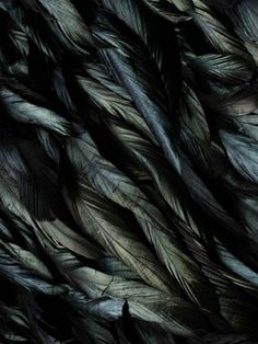 Fascinated by light play on feathers!