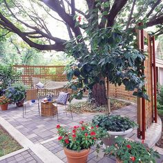 Trellis Wrap-Around- Even a big space, with a big tree, can feel intimate and private, with a trellis wrapped around it.