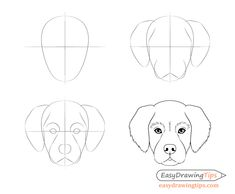 Dog Head Front View Drawing Step by Step - EasyDrawingTips - Dog Head Front Vie. - Dog Head Front View Drawing Step by Step – EasyDrawingTips – Dog Head Front View Drawing Step - Dog Face Drawing, Dog Drawing Simple, Easy Drawing Steps, Basic Drawing, Drawing Drawing, Dog Sketch Easy, Drawing Ideas, Art Drawings Sketches Simple, Animal Sketches
