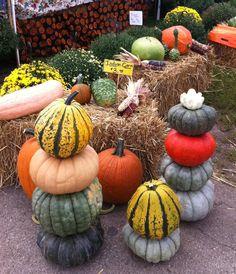 Pumpkins & Gourds...  www.fleurishcreativestudio.com